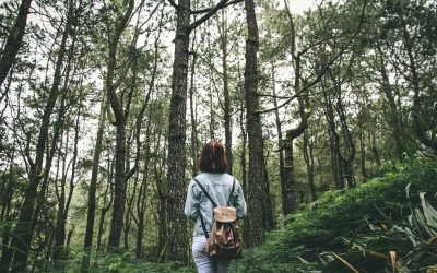 Die Natur als Seelenraum